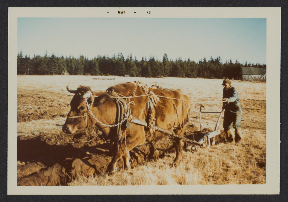 Clyde Torrey Plowing His Fields Photograph, May 1970