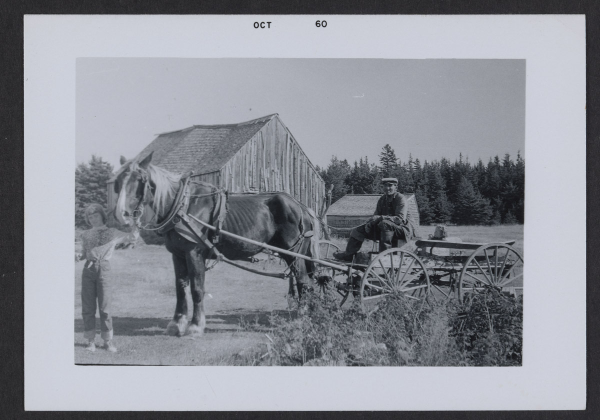 Clyde Torrey with Horse and Wagon Photograph, October 1960